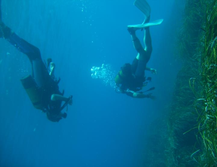 Oceans Edge Diving